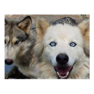 Postal de la manada de lobos