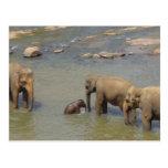 Postal de la manada del elefante