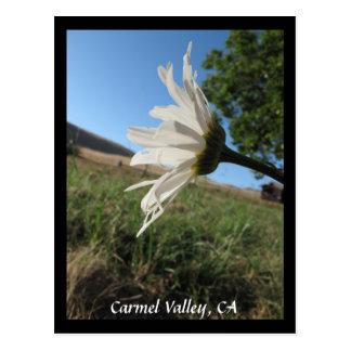 Postal de la margarita del valle de Carmel