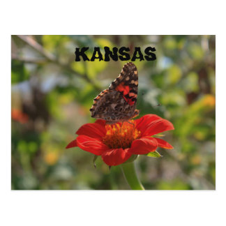 Postal de la mariposa de Kansas