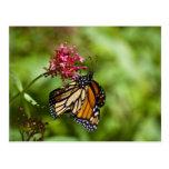 Postal de la mariposa de monarca