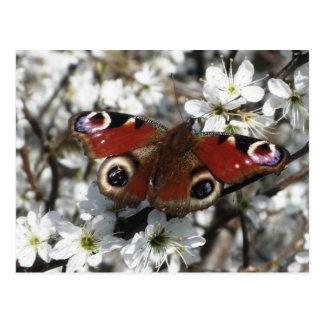 Postal de la mariposa de pavo real