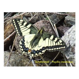 Postal de la mariposa de Swallowtail