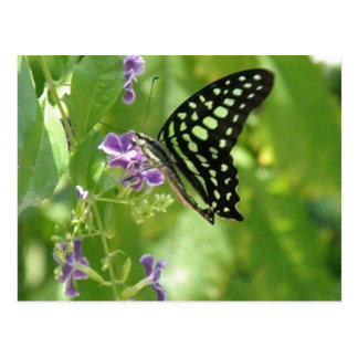Postal de la mariposa del jardín
