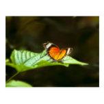 Postal de la mariposa (sensaciones calientes)