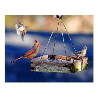 Postal de la mesa de desayuno pájaros