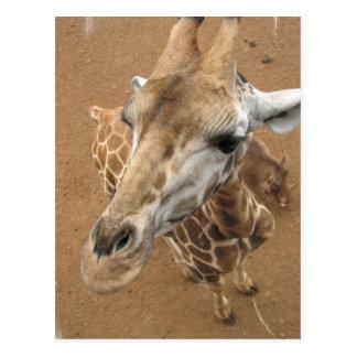 Postal de la mirada de la jirafa