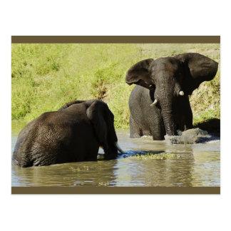 Postal de la natación del elefante (elefante afric
