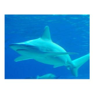 Postal de la natación del tiburón
