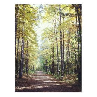 Postal de la naturaleza Paseo hermoso en el bosqu