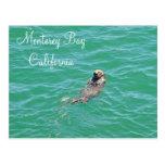 Postal de la nutria de mar de la bahía de Monterey