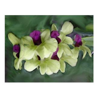 Postal de la orquídea