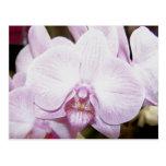 Postal de la orquídea cuatro