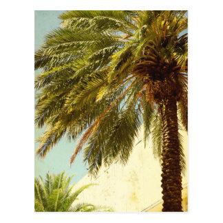Postal de la palmera