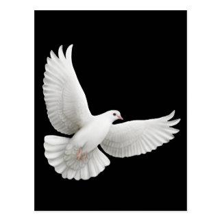 Postal de la paloma del blanco que vuela