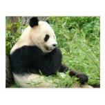 Postal de la panda