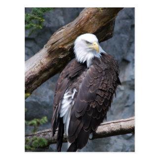 Postal de la perca de Eagle