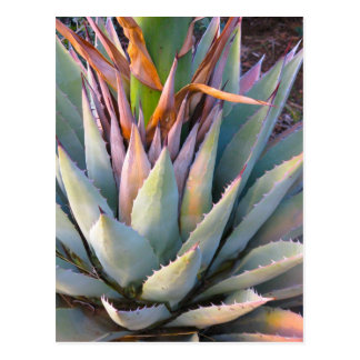Postal de la planta del agavo