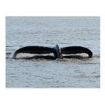 Postal de la platija de la cola de la ballena joro