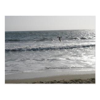 Postal de la playa de California Venecia