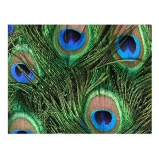 Postal de la pluma del pavo real
