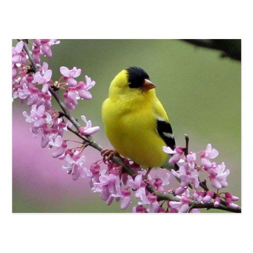 Postal de la primavera/fondo rosado