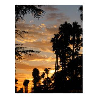 Postal de la puesta del sol de la palmera de Los Á
