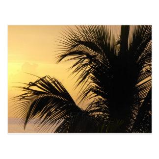 Postal de la puesta del sol de la palmera