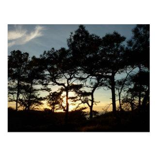Postal de la puesta del sol de los pinos de Torrey
