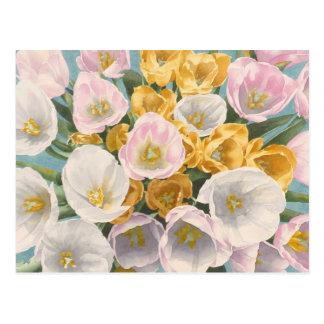 Postal de la rabieta del tulipán