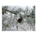 Postal de la rama del pino Nevado