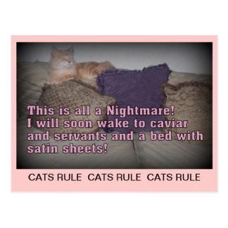 Postal de la regla de los gatos