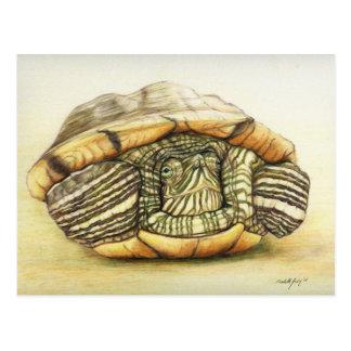"""Postal de la reproducción del arte de la """"tortuga"""""""