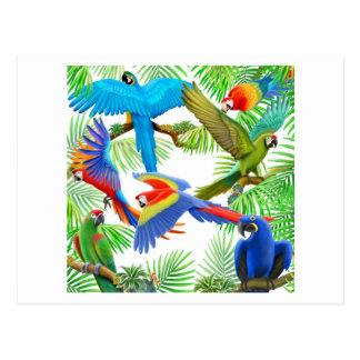 Postal de la selva del Macaw