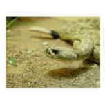 Postal de la serpiente de cascabel