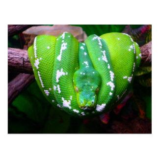 Postal de la serpiente verde