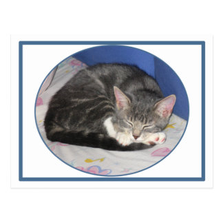 Postal de la siesta del gatito de las manoplas