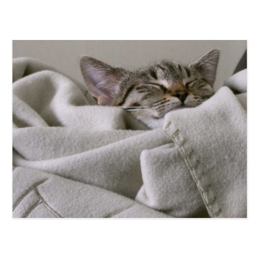 Postal de la siesta del gato del gatito