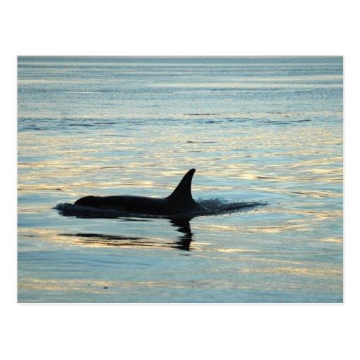 Postal de la silueta de la orca