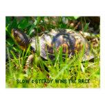 Postal de la tortuga de caja