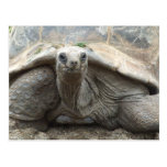 Postal de la tortuga de las Islas Galápagos