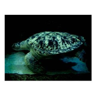 Postal de la tortuga de mar