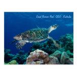 Postal de la tortuga de mar de Hawksbill