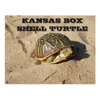 Postal de la tortuga de Shell de la caja del país
