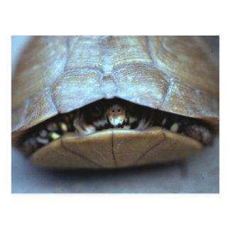Postal de la tortuga - foto del vintage