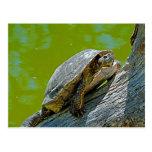 Postal de la tortuga que sube