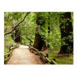 Postal de la trayectoria II de maderas de Muir