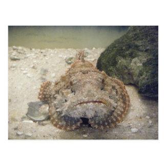 Postal de la vida marina #2 de Alabama