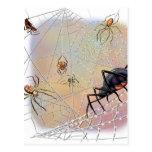 Postal de las arañas
