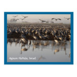 Postal de las aves migratorias
